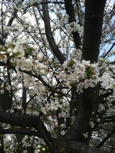 Twas Easter-Sunday. The full-blossomed trees Filled all the air with fragrance and with joy. ~Henry Wadsworth Longfellow