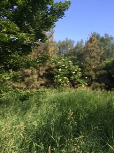 pullman landscape 6